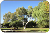 East Fremantle Parks